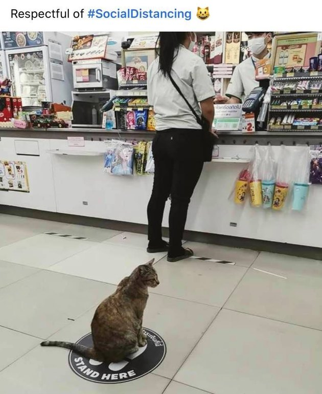 cat practices social distancing at store