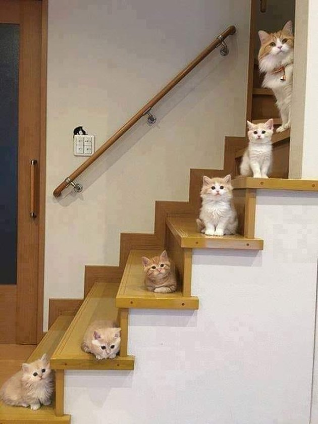 orange cats sit on stairs