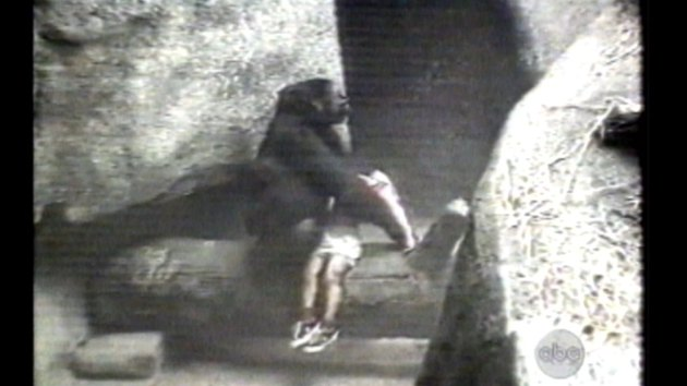 Binti Jua carrying an 3-year-old boy to safety in 1996