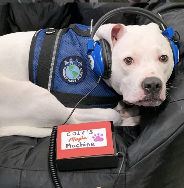 "Cole the Deaf Dog listening to his ""magic machine"" headphones"