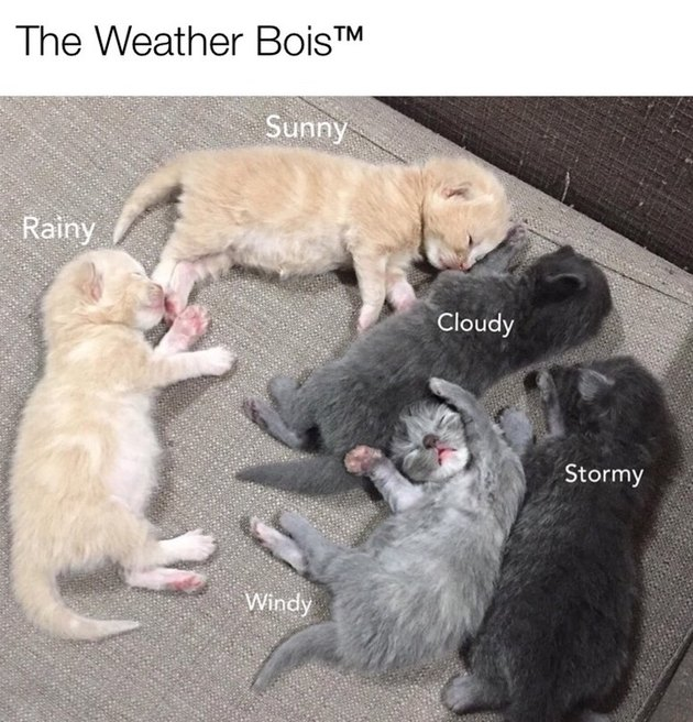 kittens named after the weather