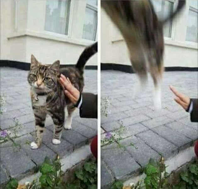 Cat escaping a pat