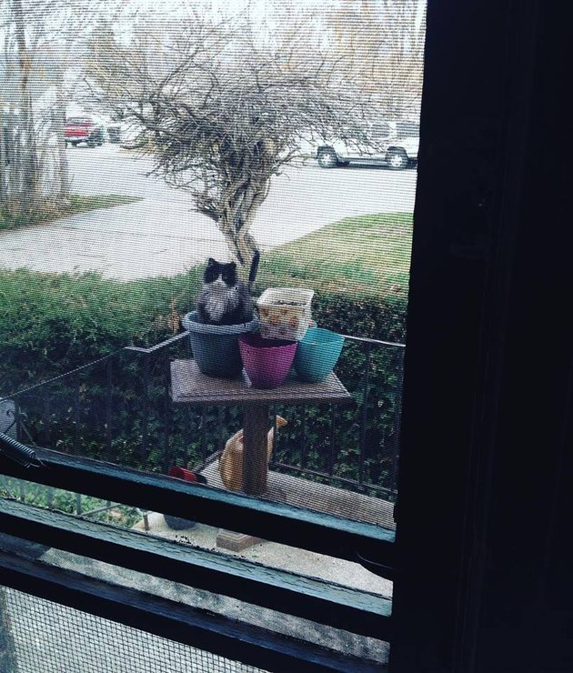 Feral cat sitting in a flower pot