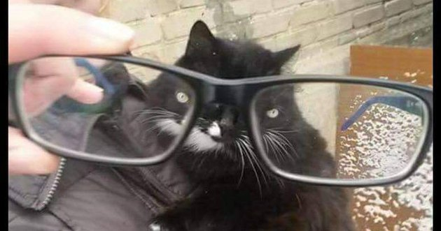 Cat through glasses