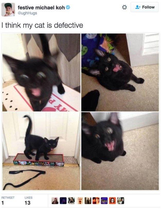 Crazy kitten!