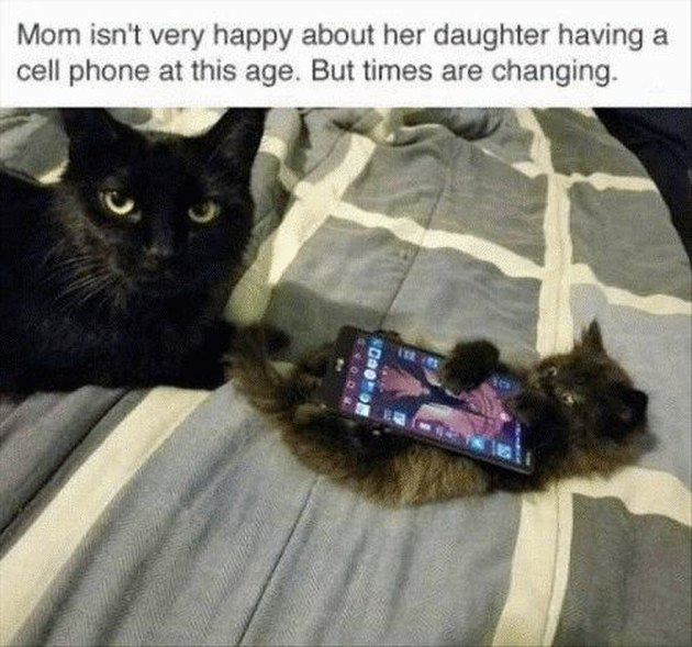 Kitten with a phone