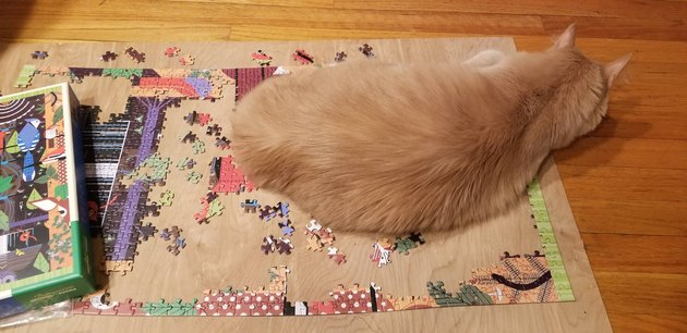 Cat laying on puzzle