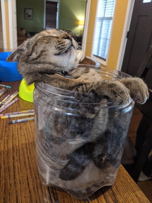 kitten sleeping in glass jar