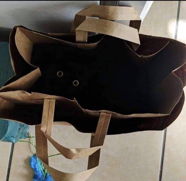 black cat hides in paper bag