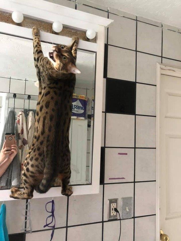 cat climbs on bathroom vanitygrum