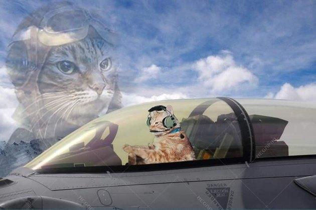 cat photoshopped as fighter pilot