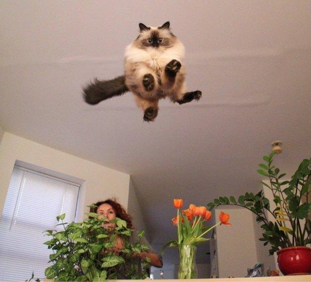 Cat flying towards the camera