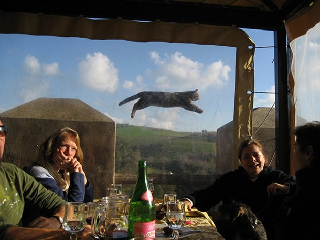 Four people dining while a cat appears to fly past the window behind them