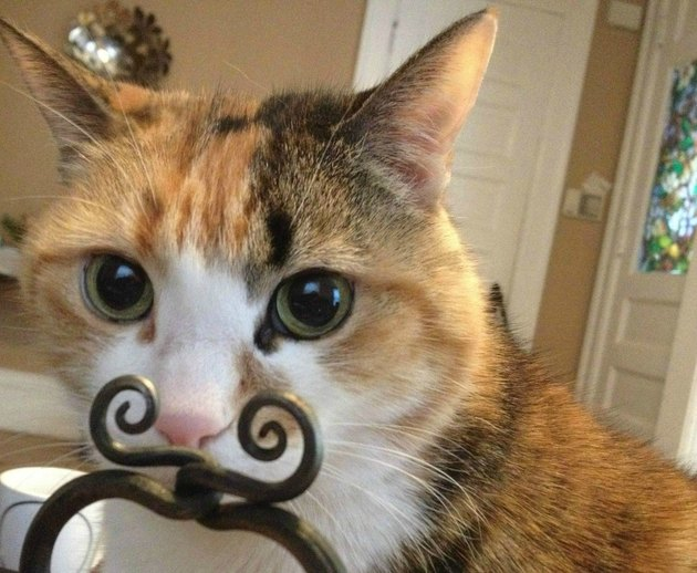 Cat standing behind a decorative object that looks like a mustache