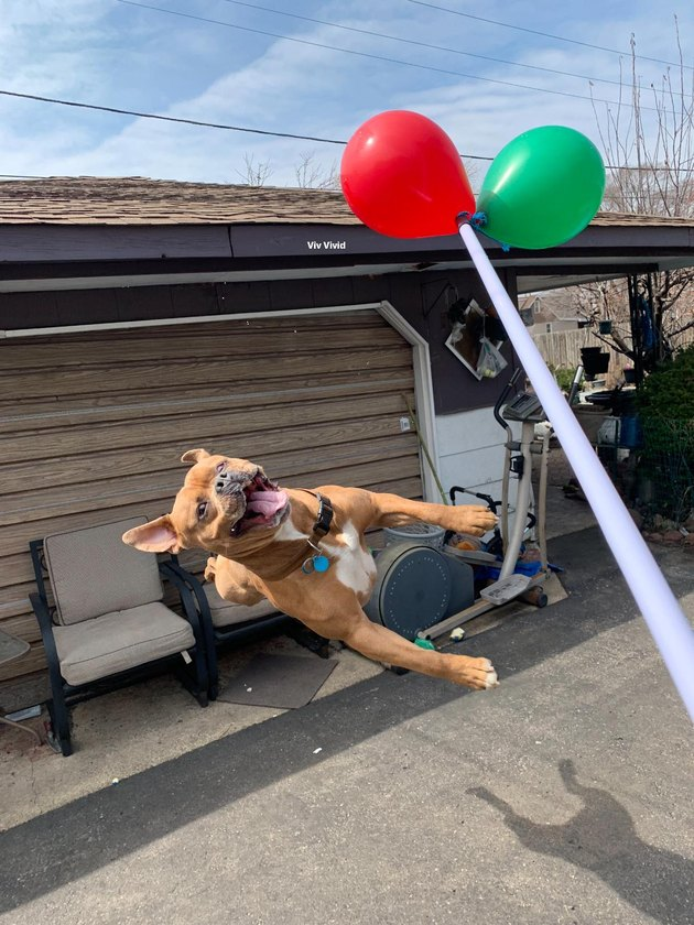 17 Dogs Reacting Hilariously To Balloons