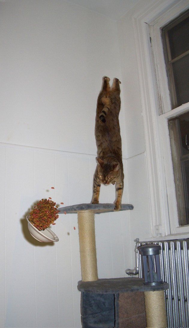 Cat doing a handstand while its bowl of food falls down