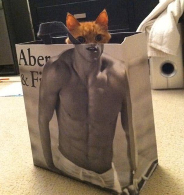 Cat's head lined up with torso of shirtless man