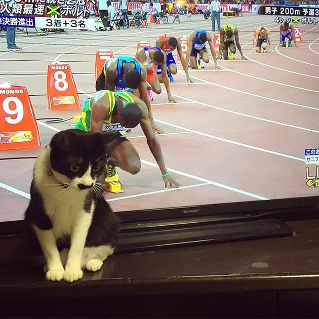 Cat in front of a TV screen lined up with row of runners