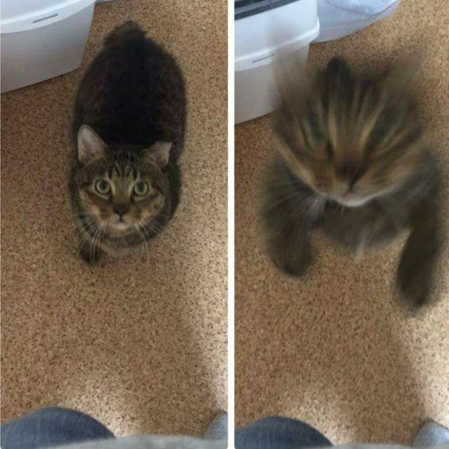 Cat leaping towards the camera