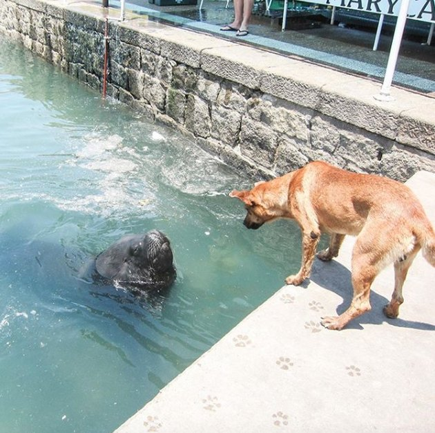 dog meeting a sea lion