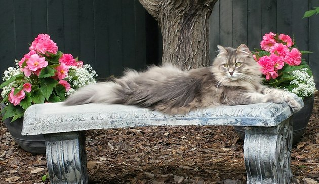 Fluffy cat lying on an outdoor stone bench