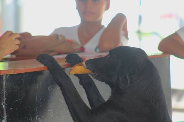 Clever capitalist dog barters for snacks with leaves at Colombian school