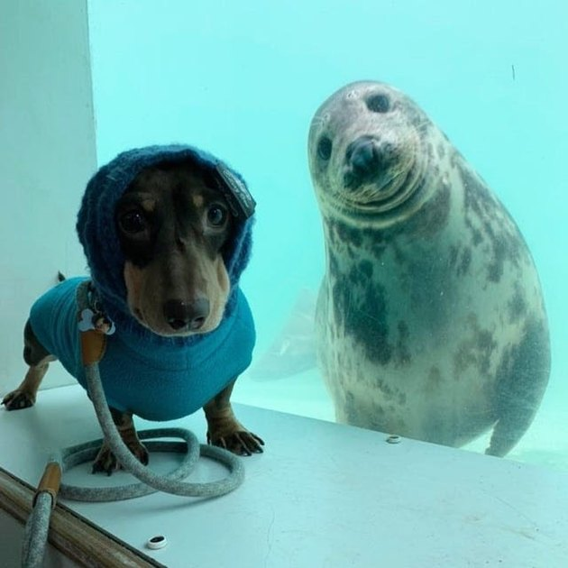 dog and seal pose for picture
