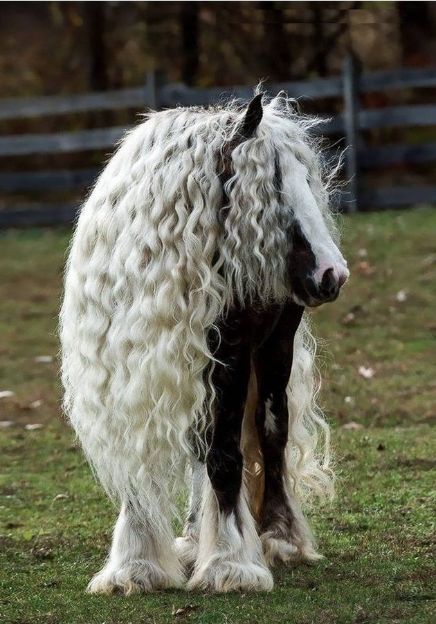 Horse with long, crimped mane.