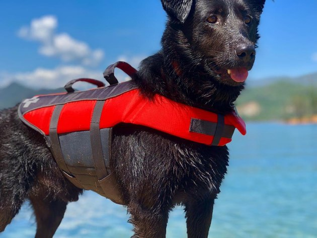 Brave dog dives into pool to save struggling playmate