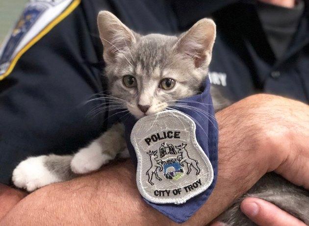Michigan kitten sworn in as police cat