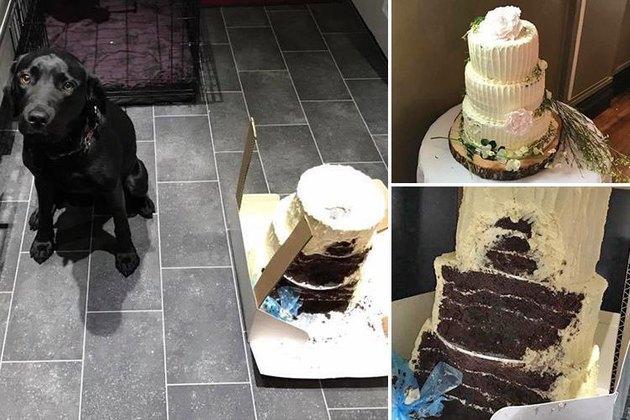 Dog ate the wedding cake!