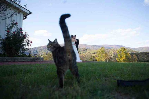 Cat photo bombing wedding pic with his butt