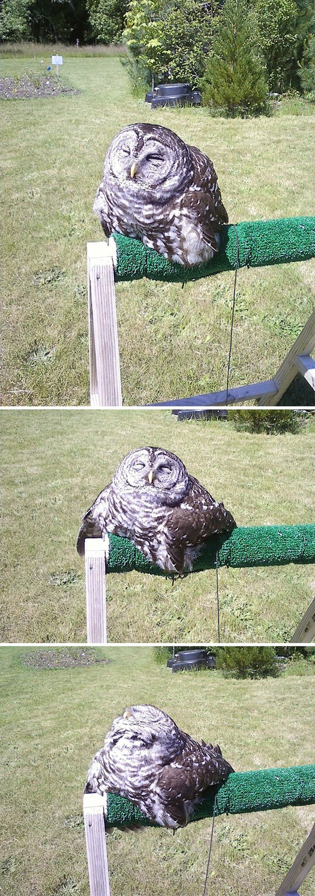 Owl looks like it's melting.