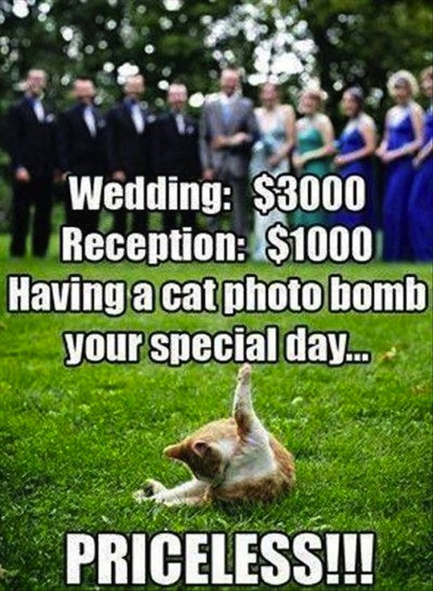 Cat licking butt in wedding pic