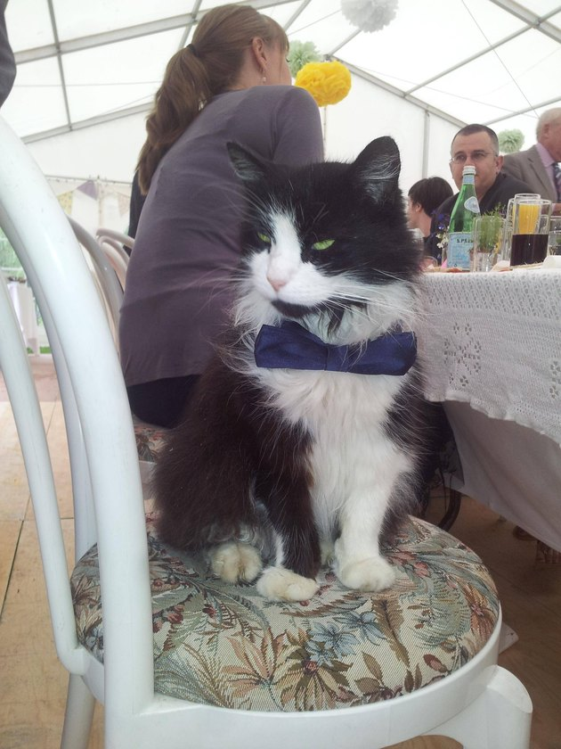 Cat in a tie sitting at a table at a wedding