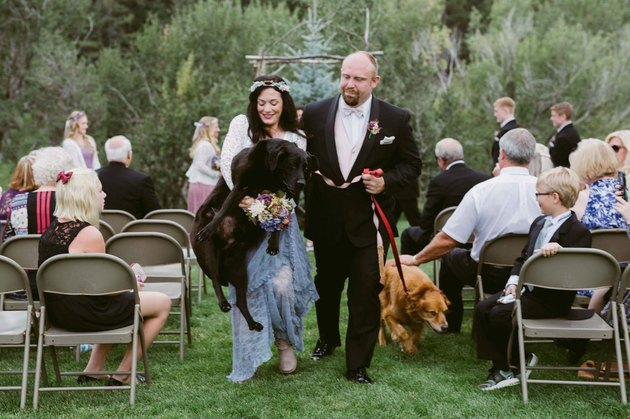 Big dog being carried down the aisle by bride in wedding