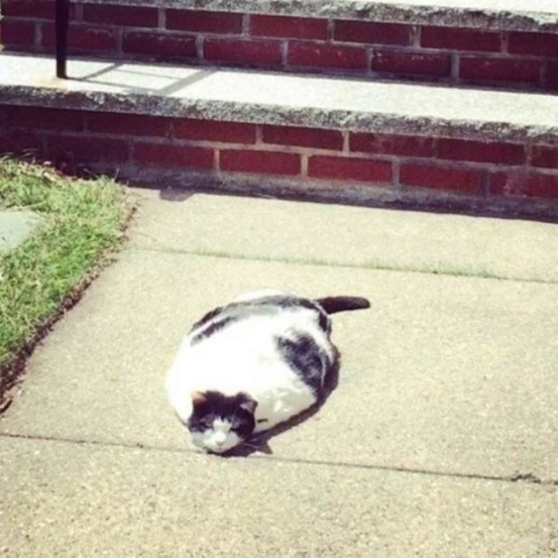 Cat looks like it's melting.