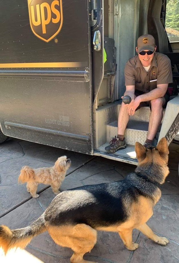 UPS driver holding ball out to two dogs