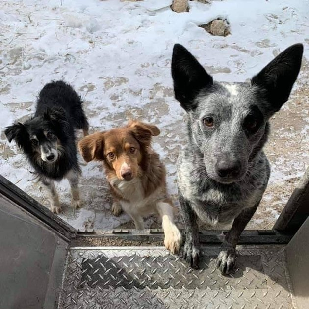 Dogs waiting on steps of UPS truck