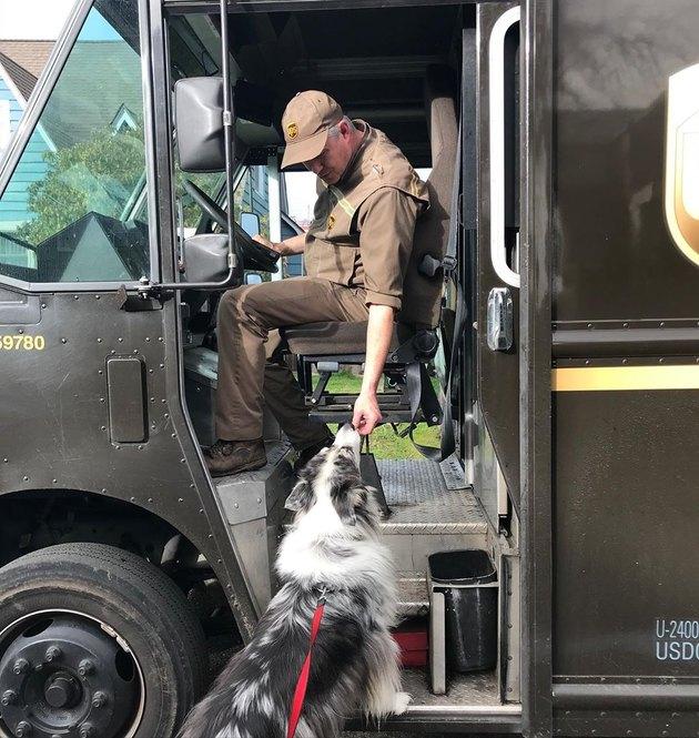 UPS driver feeding dog a treat