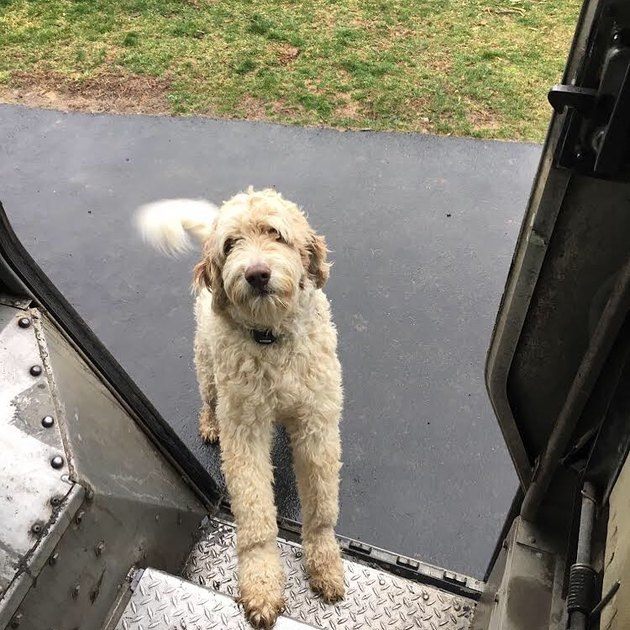 Dog waiting on steps of UPS truck