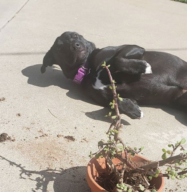 dog attacking a potted plant