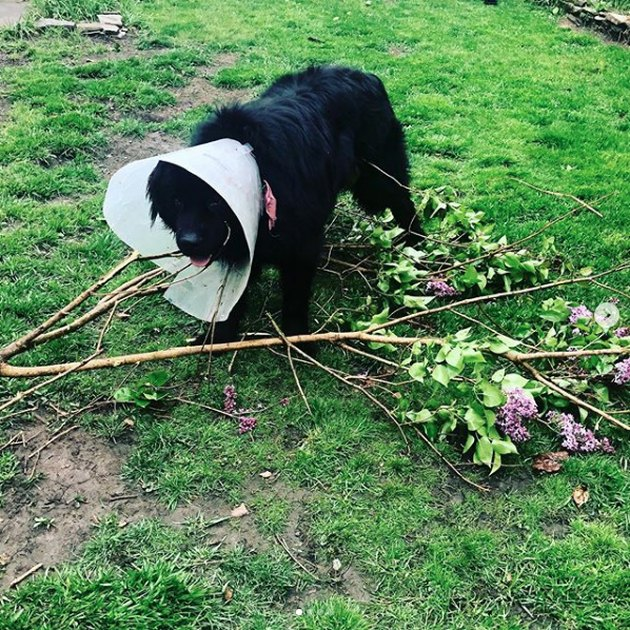 dog in a cone eating a tree