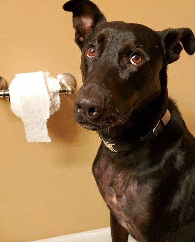 dog with half eaten roll of toilet paper