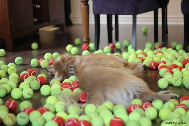 Dog lying down in pile of tennis balls