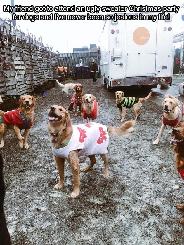 Ugly sweater party for dogs