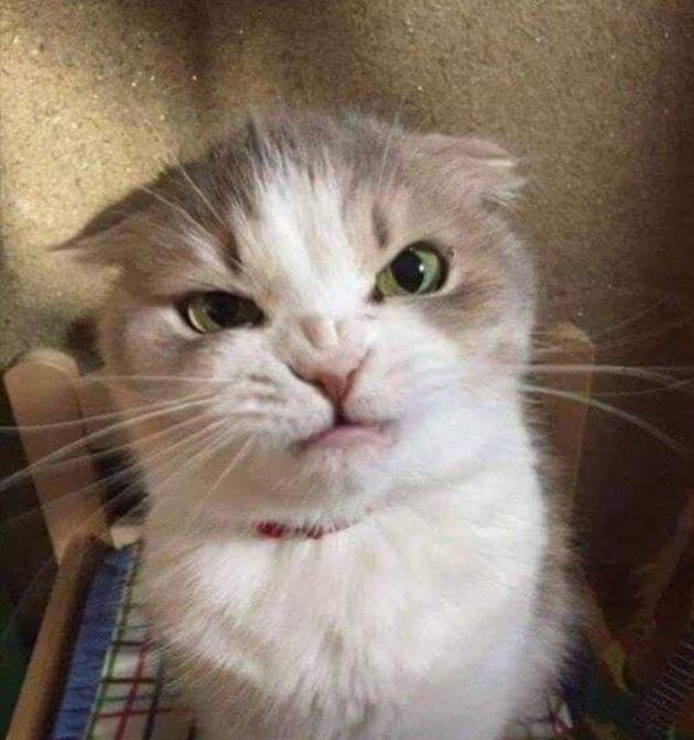 Grumpy cat scronches nose