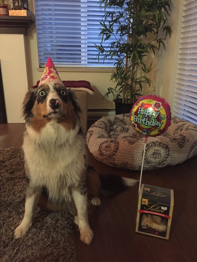 Dog in a party hat looking alarmed
