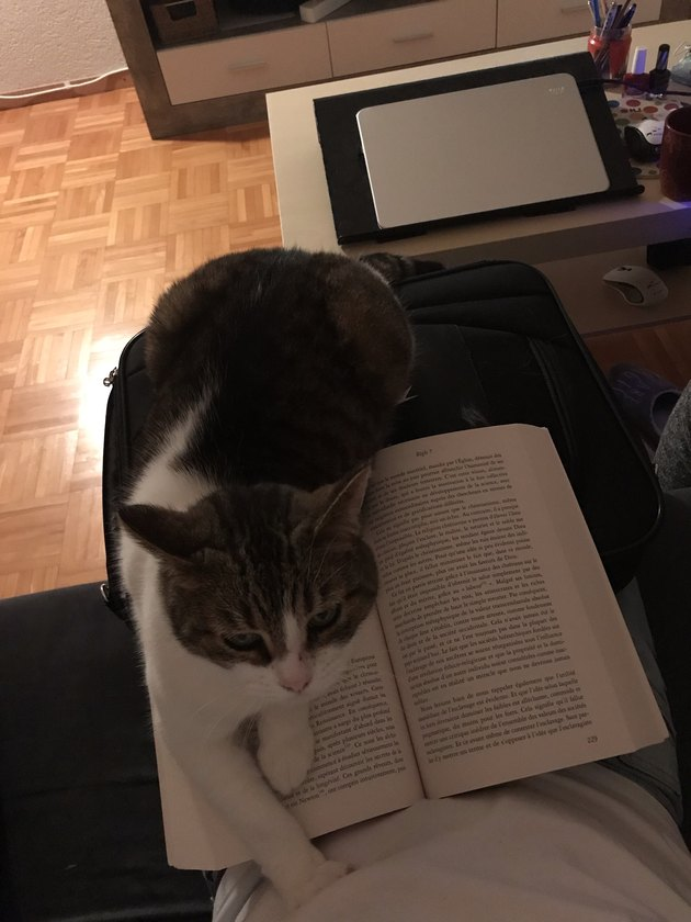 Cat sitting on book