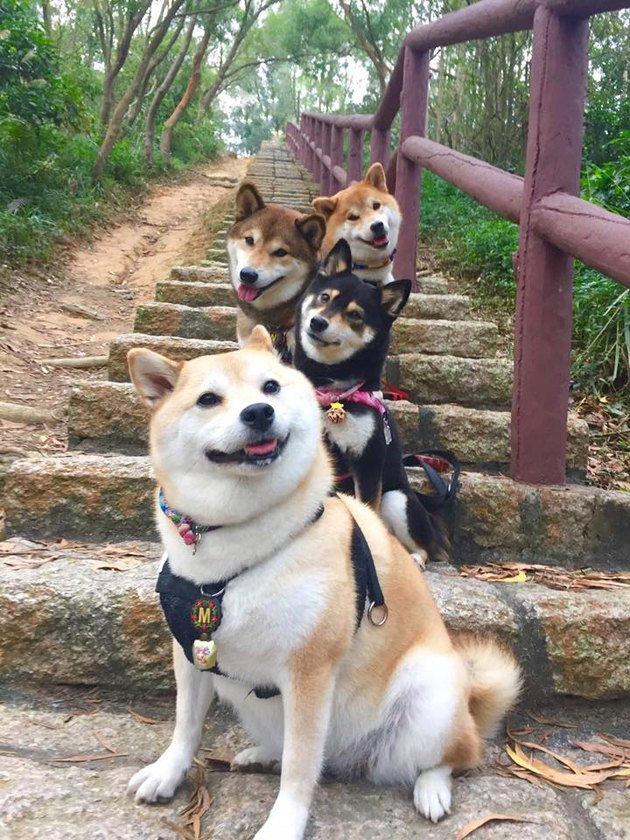 Four dogs on stairs